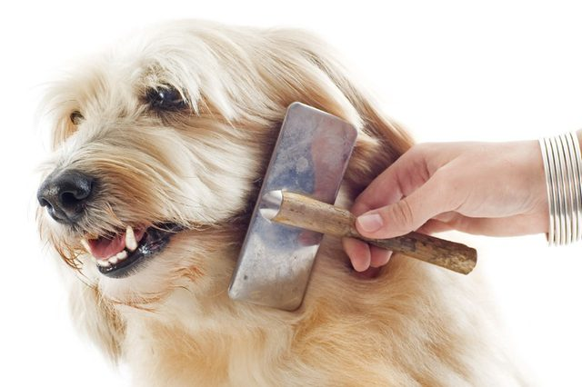 Can-You-Over-Brush-Your-Dog